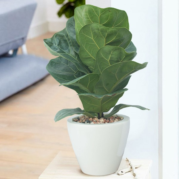 Popular Indoor House Plants New 490 Best House Plants Images On