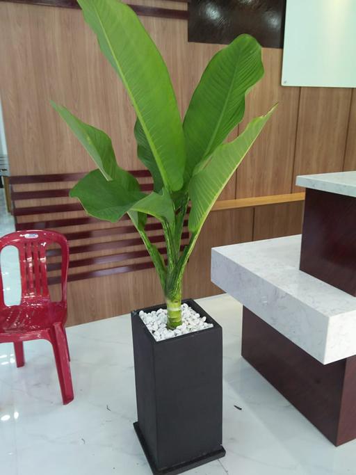 Dai Phu Gia23303