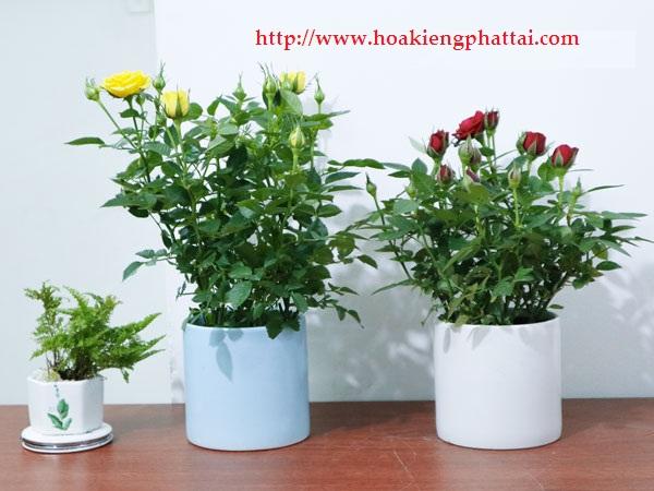 Hoa Hong Tang Le Tet